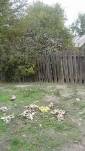 Kalantyrovka-022