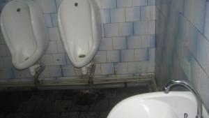 Besplatniy_tualet_Tatanin_Den 006