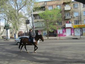 Loshad_v_Odese_2016 107
